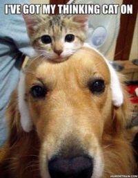 Thinking Cat...