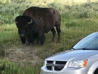 bison2018