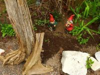 Working Gnomes  getting the garden ready for planting