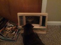 Petey loves a mirror