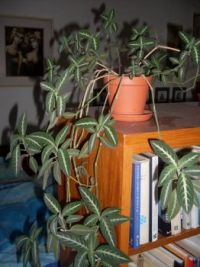 Plant in a room ...