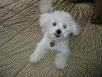 Puppy Dexter