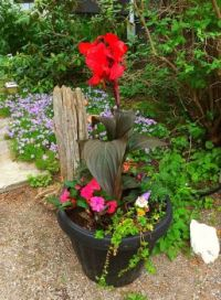 Potted plants, driftwood and other plants in this Gnome garden site