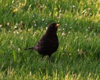 You are spotted by the blackbird!