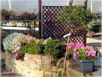 In the garden center  -  V zahradním centru