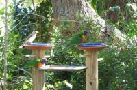 Birds on the modified  feeder this morning.