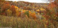 goodhue_county_fall1