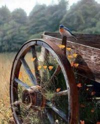 Bird & Wagon