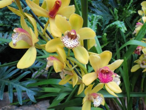6 - Orchids - Missouri Botanical Garden