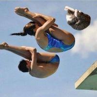 Olympics: Mixed Species Diving