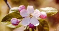 12 New Theme Tomorrow - Spring Has Sprung (14 Mothering Day-UK, Daylight Savings, 17 St Patrick 20 Vernal Equinox)