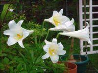 B. C. Flower 3