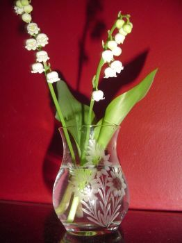 Lily-of-the-Valleys