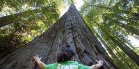That's One Big Tree