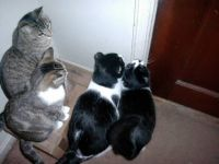 Cats wanting to go out!