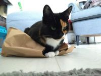 Noor's favourite place to sit: a paper bag