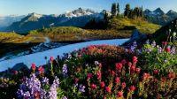 Peaceful flowery mountain scene