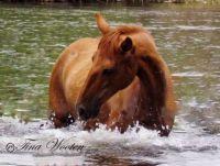 Salt River Wild Horse Beauty