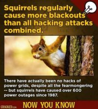 13 Facts That Prove American Wildlife Is Out-Of-This-World Bizarre - squirrels