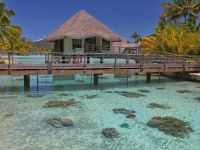 Turtle Enclosure - Bora Bora