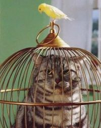 ever heard of the cats get the birds?well their a whole nother story to it. :|