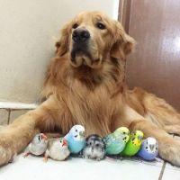 Bob and his friends