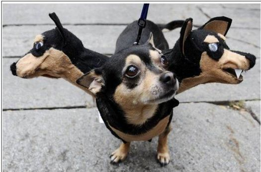 Cerberus three headed dog