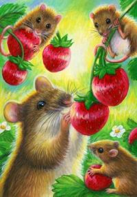 Mice and strawberries