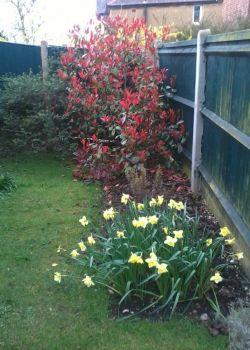Garden - springtime at last!