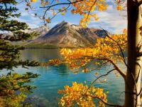 Aspens on a Lake