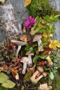 Alaska Fall treasures