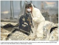 Cadaver dog at fire scene