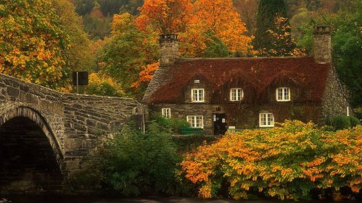 Cottage and Foliage