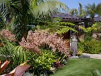 Tropical front yard