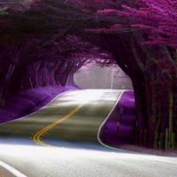 Tunnel of Trees, California