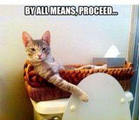 Convenience Cat