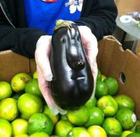People Faced Eggplant