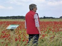 Series Poppies: My clothes fitted in well within the field of poppies           8