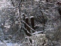 Ice coats the fenceline between the back pasture and the woods