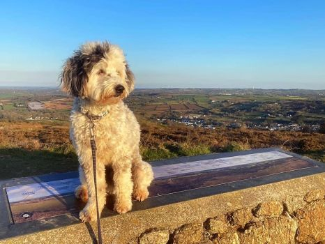 Floyd Gazing Out Over Carnmarth, Cornwall