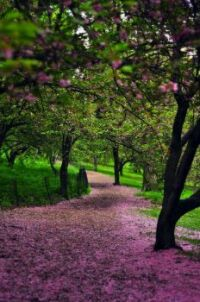 I want to live in these woods so I can walk barefoot on this flower path!
