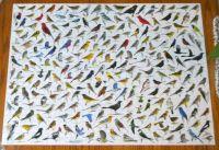 1000 pie3ece Bird Puzzle