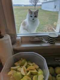 Wanting To Help Make Applesauce!!