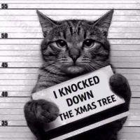 Kitty Crime Suspect