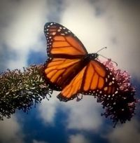 Butterfly Garden, Central Park, NYC