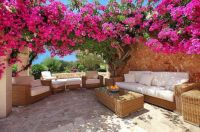 Bougainvilla as sunshade over a patio