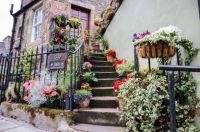 The Potted Garden, Stockbridge, Edinburgh