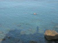 Early morning calm sea at Rena Majore, Sardinia, Italy