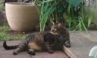 """Teaguer aka """"Fat Cat"""""""