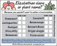 Elizabethan slang or plant name?